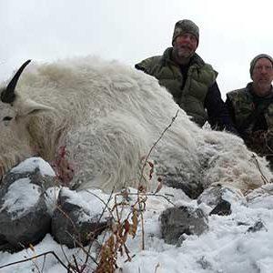 mountain-goat-cta-400-by-300-300x300